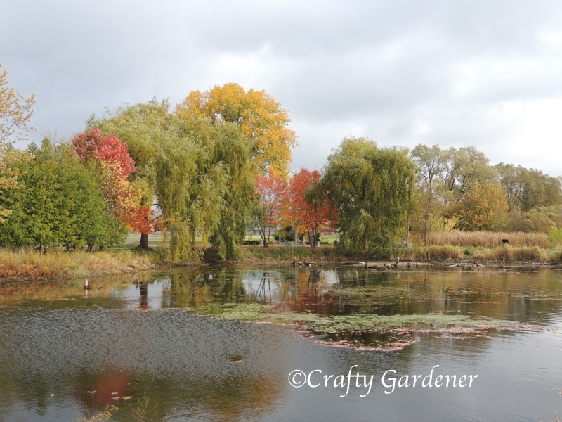 reflections in colour down by the bay - craftygardener.ca