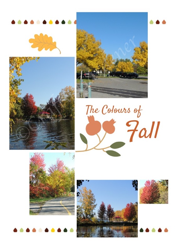 The beauty of Autumn down by the bay at craftygardener.ca