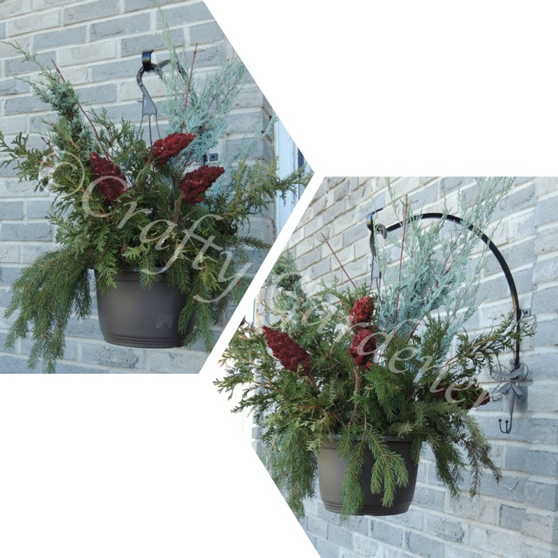 pots filled with winter greenery at craftygardener.ca