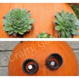 'eye'm looking at you at craftygardener.ca