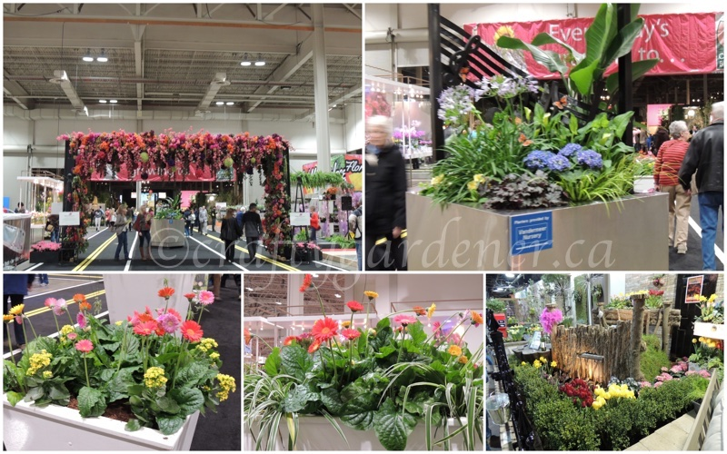 Canada Blooms 2016