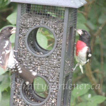 At The Fly Thru Feeder