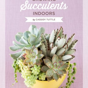 Growing Succulents Indoors