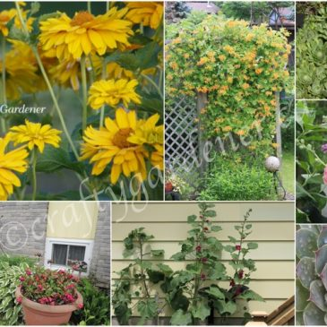 Alphabetical Garden Tour – H