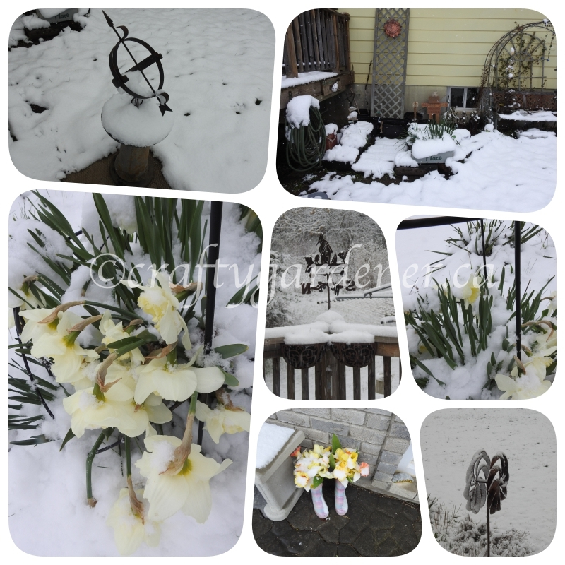April 21, 2021 and it is snowing at craftygardener.ca