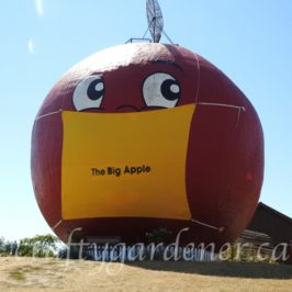 The Big Apple wearing a mask, photo taken by craftygardener.ca
