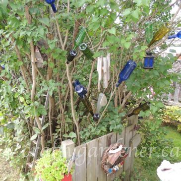 Relocating the Bottle Tree