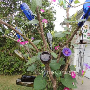 The 'Glory'ous Bottle Tree