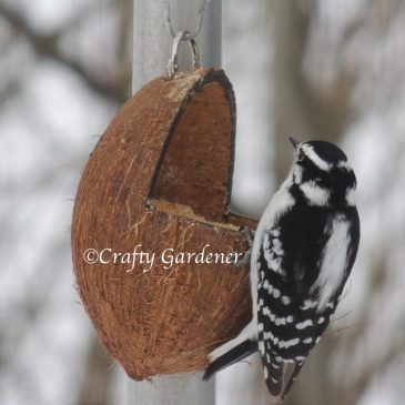 The Coconut Feeder with Suet