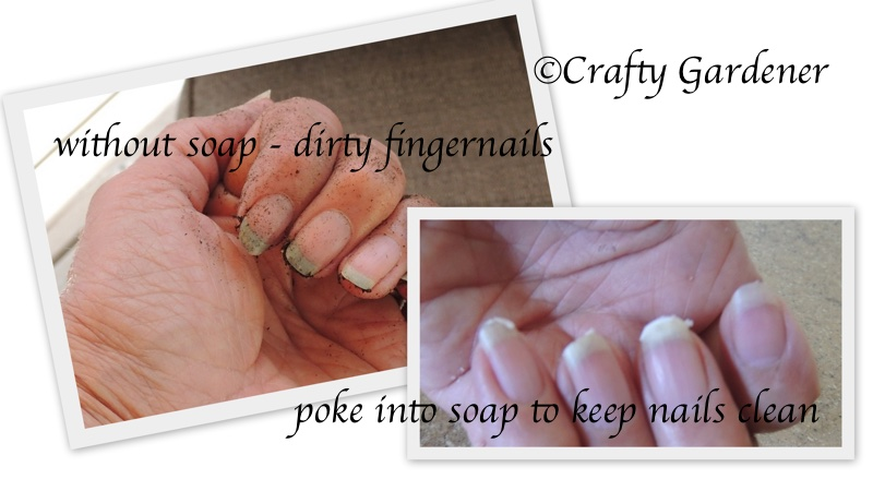 a tip for clean fingernails while gardening at craftygardener.ca