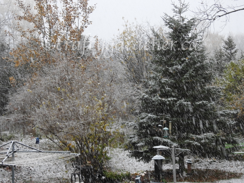 Oct. 27, 2020 and the first snow arrives at craftygardener.ca