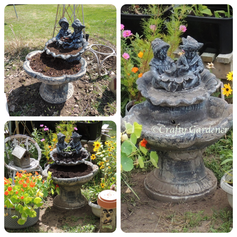 converting the old cement fountain into a planter at craftygardener.ca