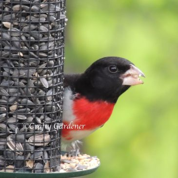 G for Grosbeaks