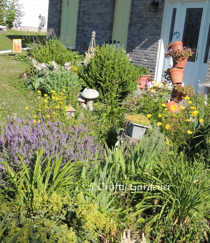 part of the front garden July 2014