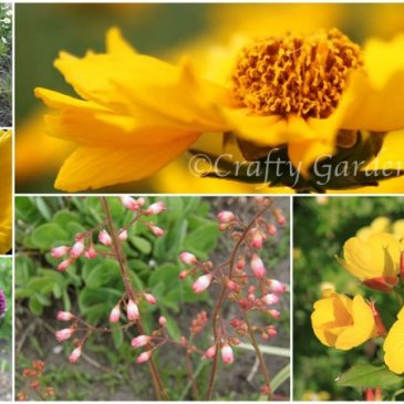 Lots of Yellow Blooms for June