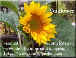 Seed Label Printable Sunflower