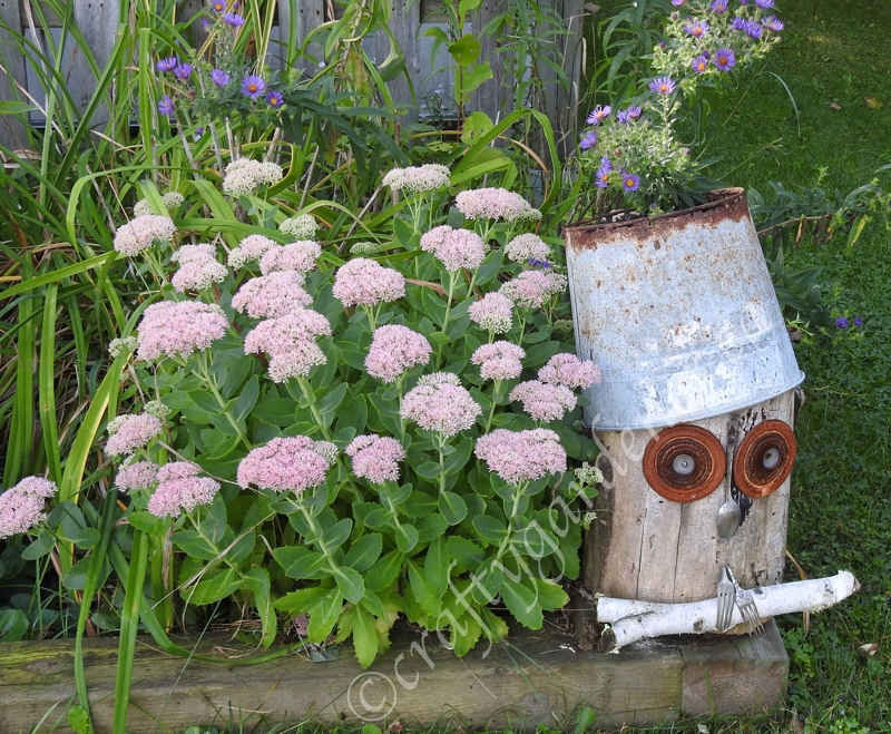 the log owl at craftygardener.ca