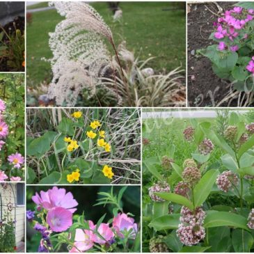 What's in the Garden? – M