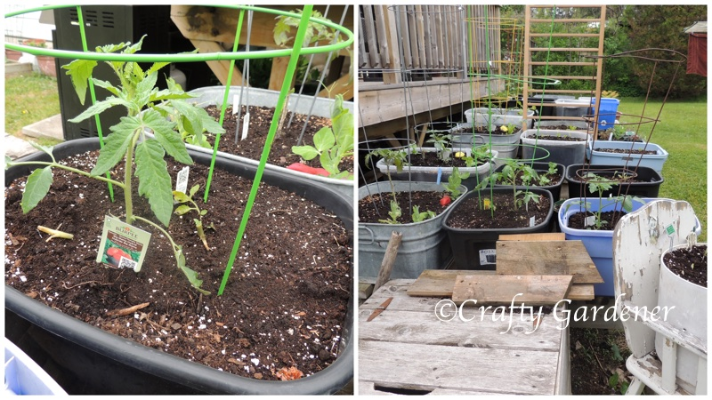 the plant tables on May 25, 2015 at craftygardener.ca