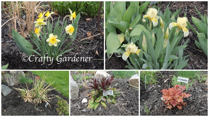 spring blooms and plants at craftygardener.ca