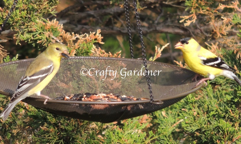 mesh bird feeder at craftygardener.ca