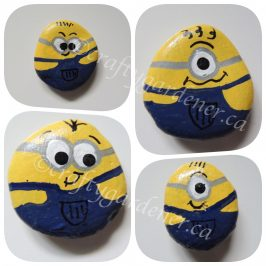 painting minion rocks at craftygardener.ca