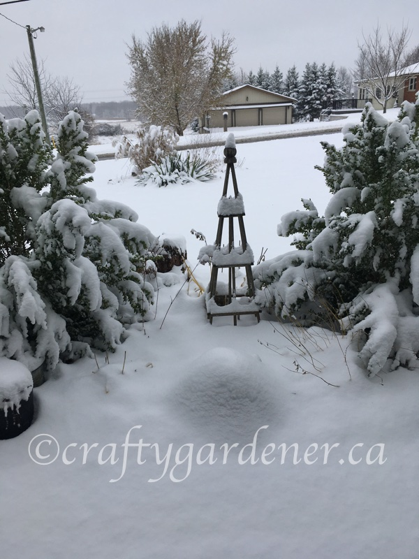 snow arrives at craftygardener.ca