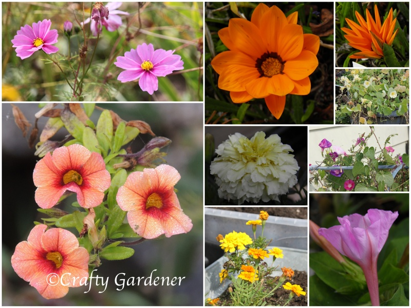 oct blooms1a