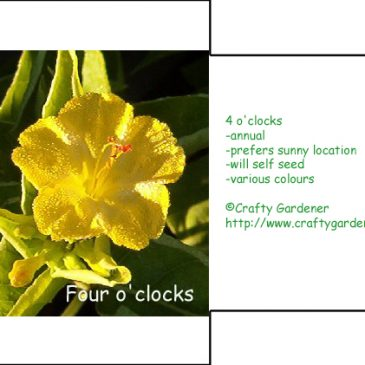 Seed Packet Printables 4 O'clocks