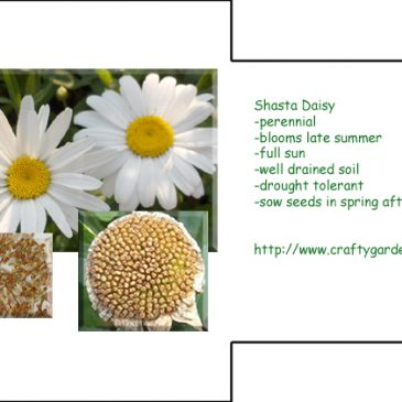 Seed Packet Printable Daisy
