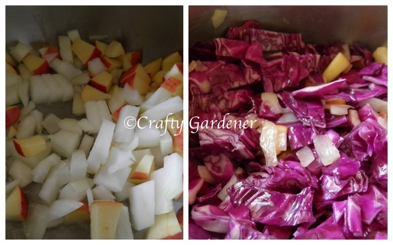 red cabbage7a