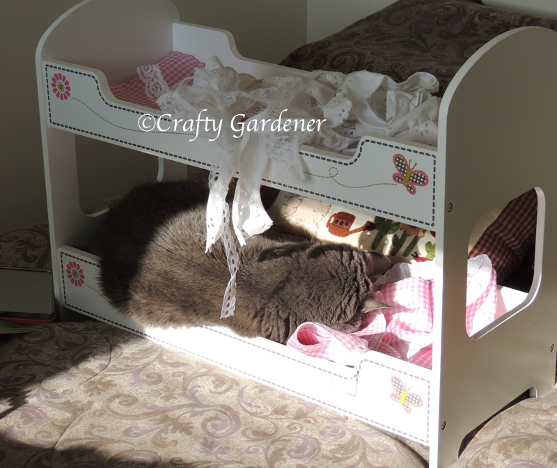 Shadow sleeping in the doll bunk beds