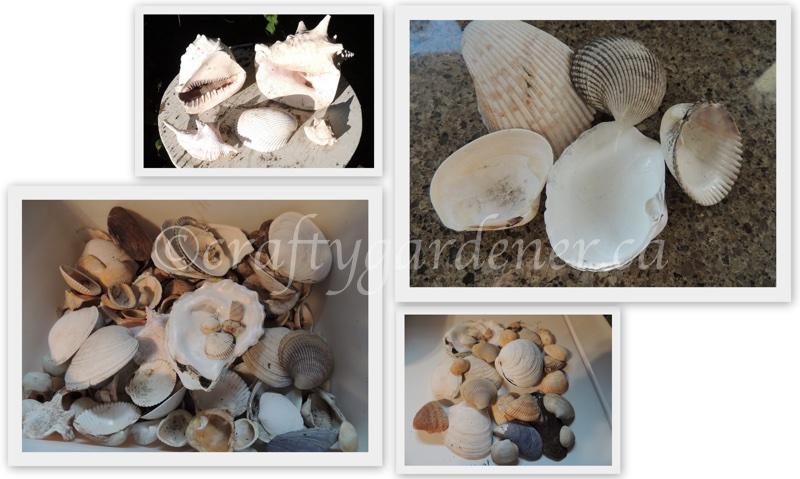 my shell collection at craftygardener.ca