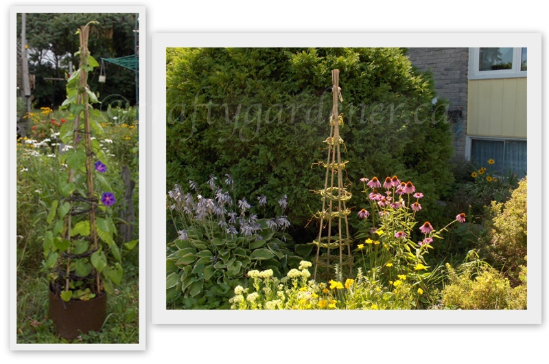 grape vine obelisk at craftygardener.ca