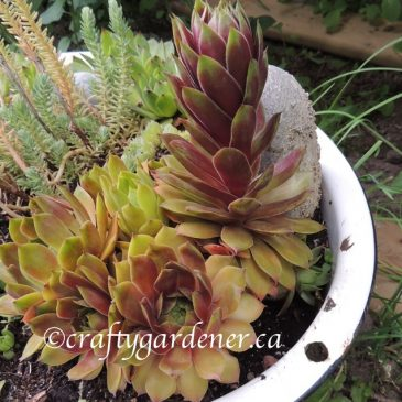 Creating a Succulent Pot