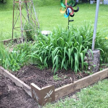 Improving the Windmill Garden